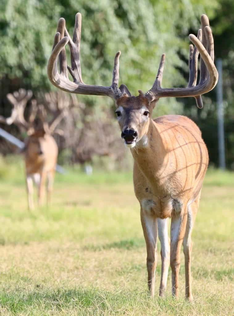 M3 Whitetails – New Certified Facility In Progress…Where