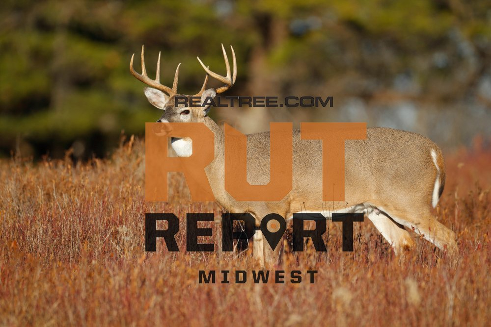 Midwest Rut Report: Cold Front Has Deer Moving | Realtree Camo