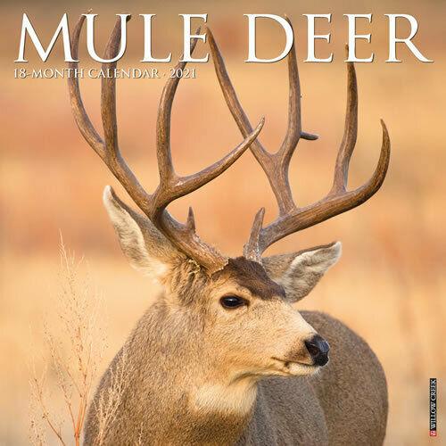 Mule Deer 2021 Wall Calendar (Free Shipping) | Ebay