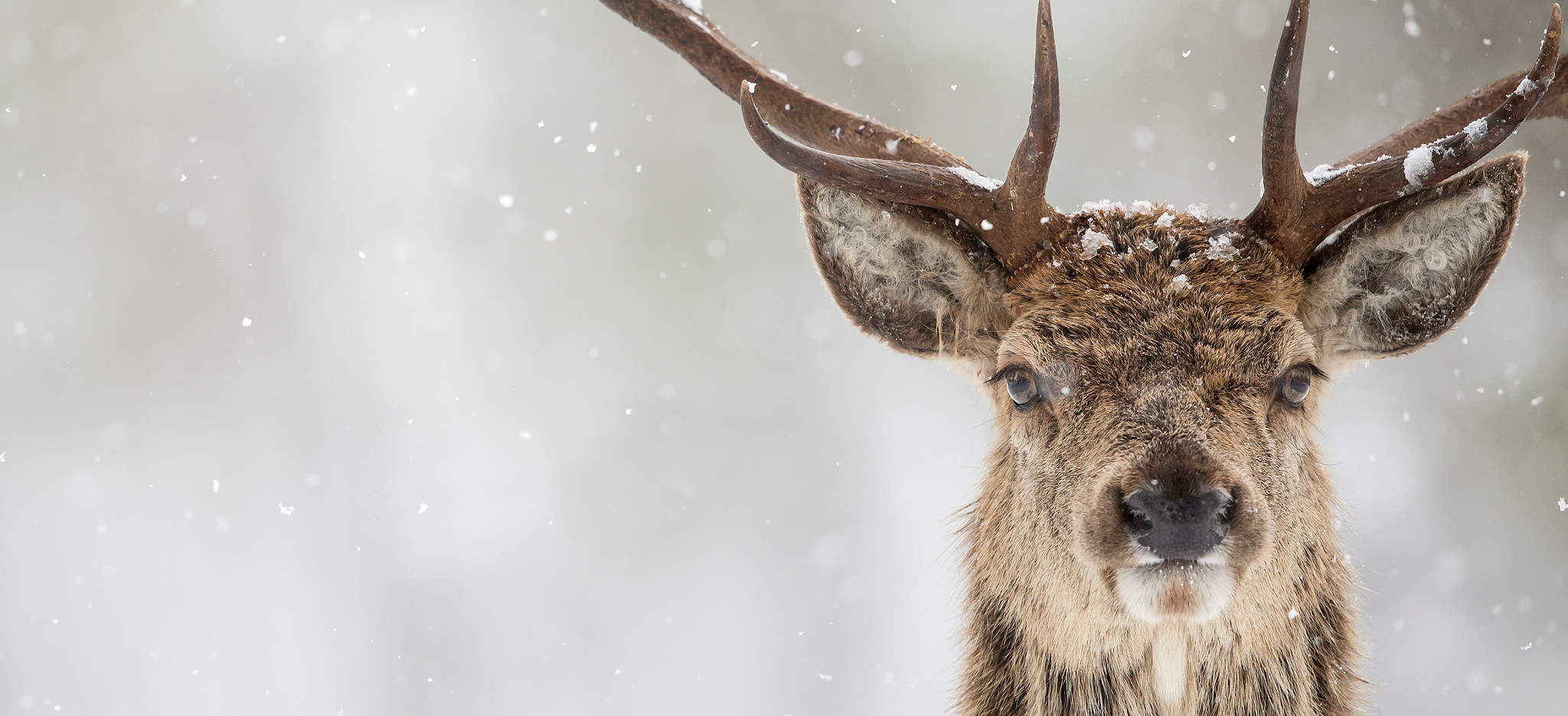 Natures Images - Wildlife Photography Holidays, Trips And