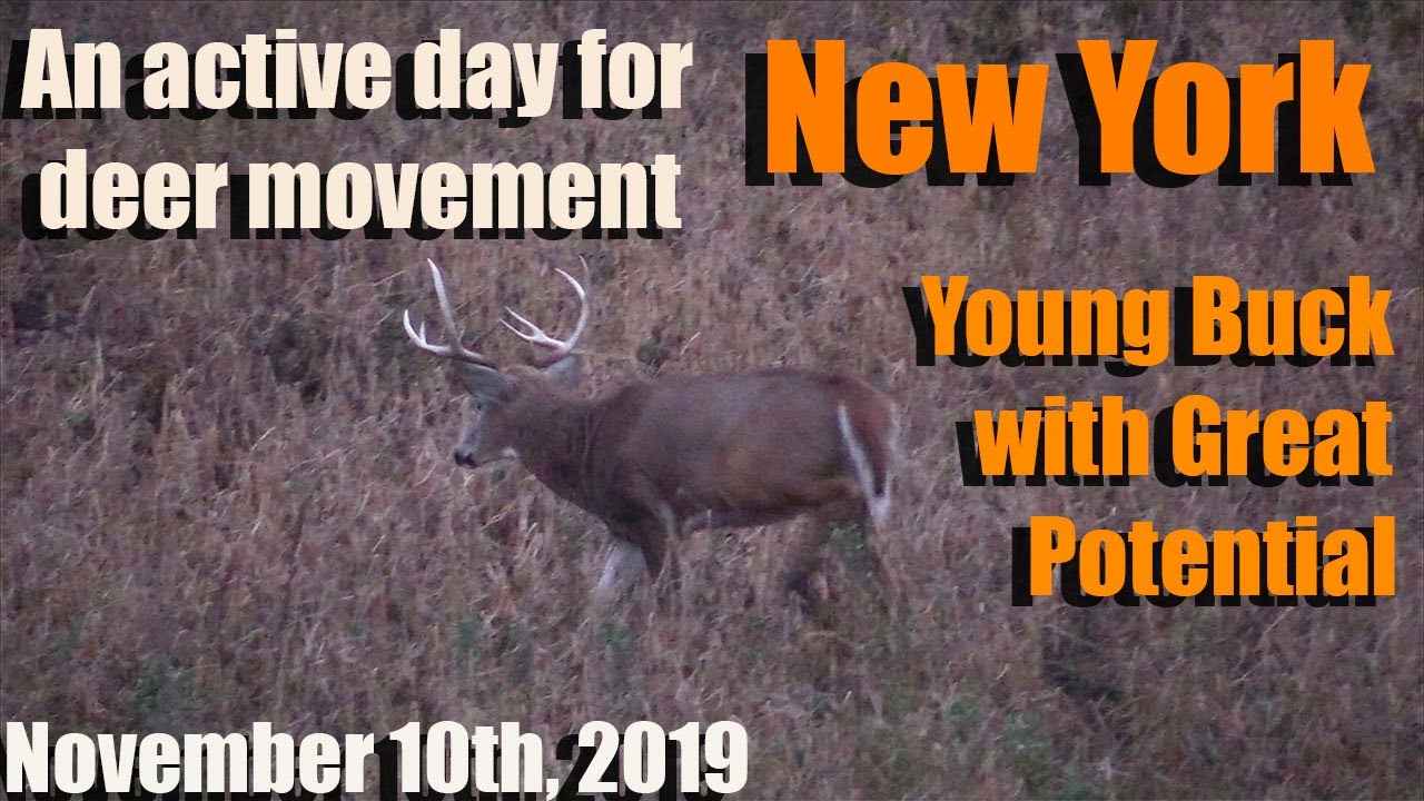 New York Deer Hunting 2019 - Young Buck With Incredible