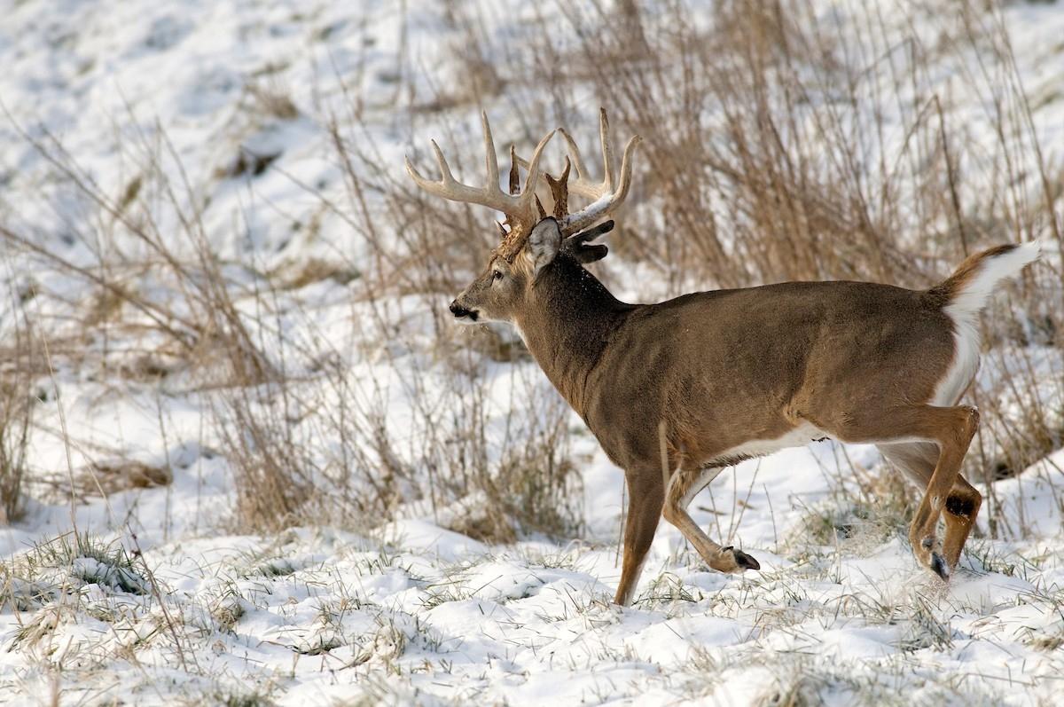 Nys 2020 Deer Rut – Template Calendar Design