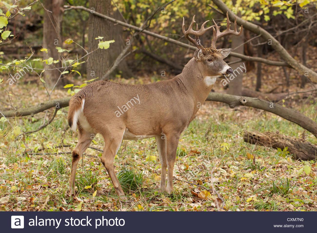 Pick Deer Rut 2020 Illinois | Calendar Printables Free Blank