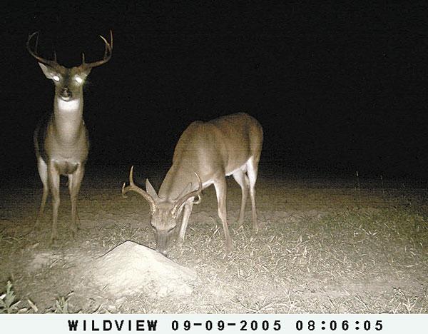 Pre-Rut Deer Hunting Strategies Revealed