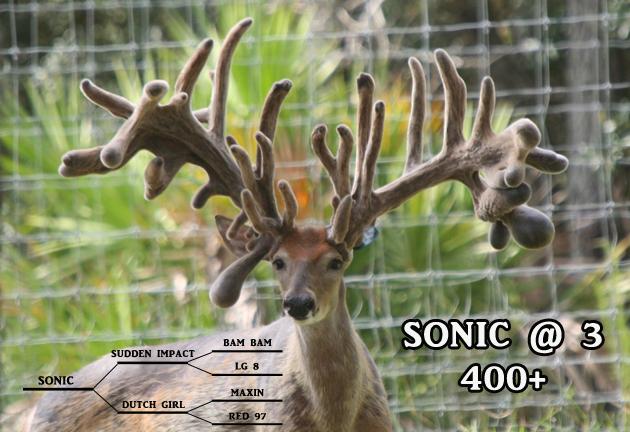 Roberts Ranch Has The Best Genetic Breeder Bucks In Florida!