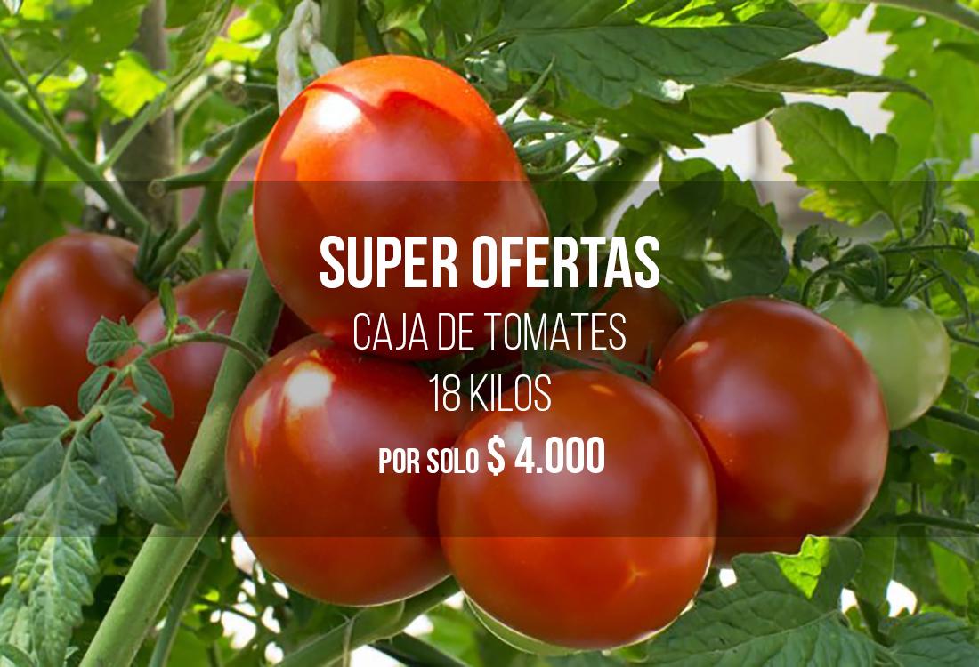 Robotfrut Distribuidora De Frutas Y Verduras En La Vega