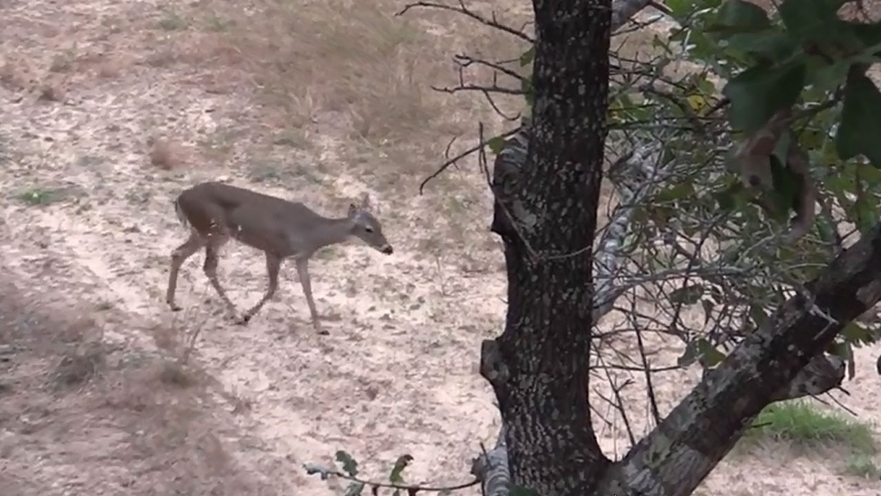 Rut Hunting Opps That Last Until February - The Best And