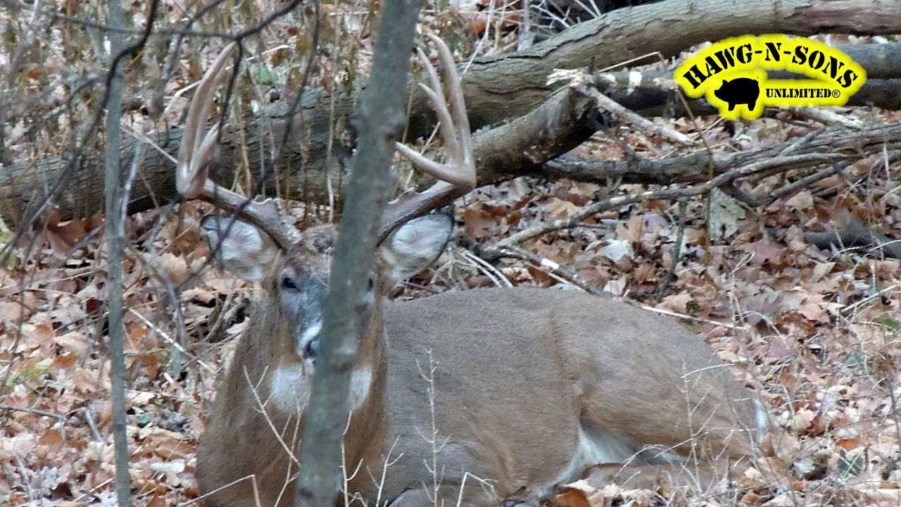 Self Filmed Whitetail Deer Hunting - Big Post Rut Bucks