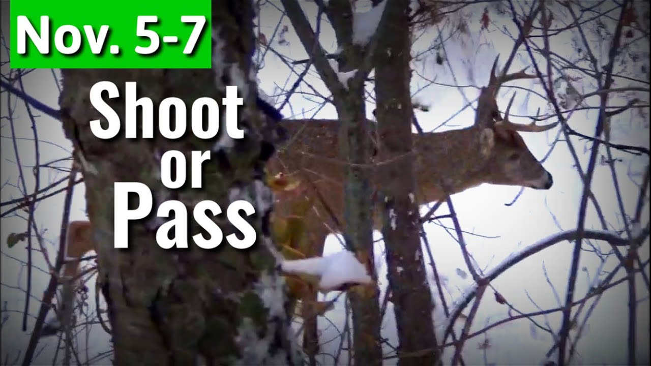 Shoot Or Pass 8 Pt Buck Encounter - Bow Hunting Peak Rut