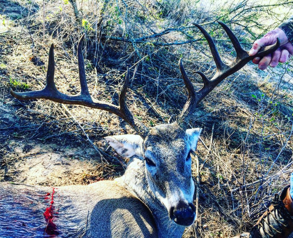 South Texas Whitetail Hunts-Low Fence (Frio County