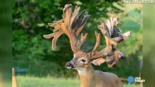 Study: Some Deer Farmers Put Ethics On Line For Profit