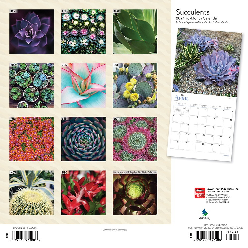 Succulents 2021 12 X 12 Inch Monthly Square Wall Calendar