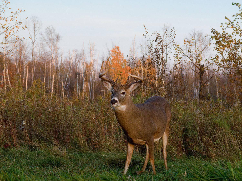 Take Illinois Deer Rut Seasn 2020 | Calendar Printables