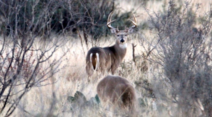 The Whitetail Rut Is Coming - Are You Prepared