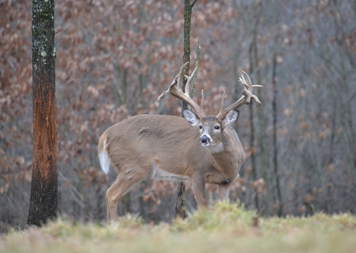 Trophy Whitetail Deer Hunts On Private Land | High Fence