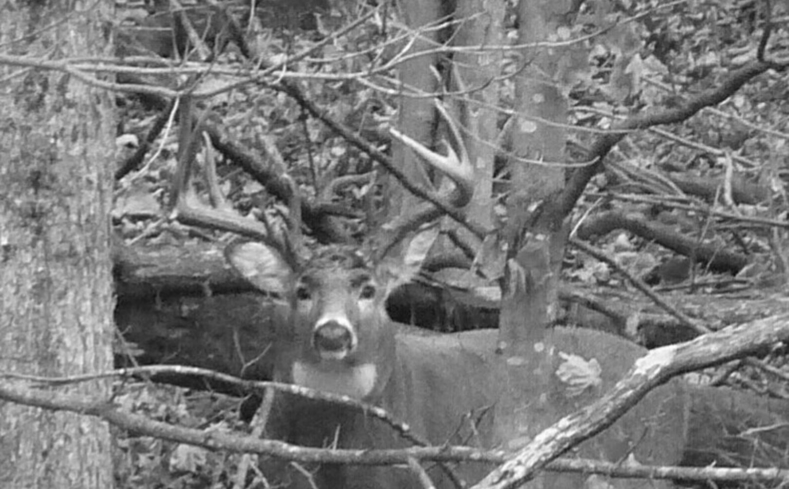 Weekly Midwest Whitetail Rut Forecast: October 12Th