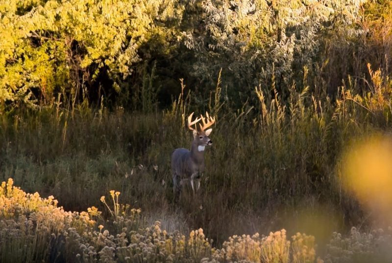What Do You Know About The Whitetail Rut | Ehuntr