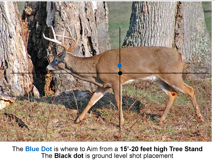 Where To Aim Broadside Walking Buck - We'Re All About