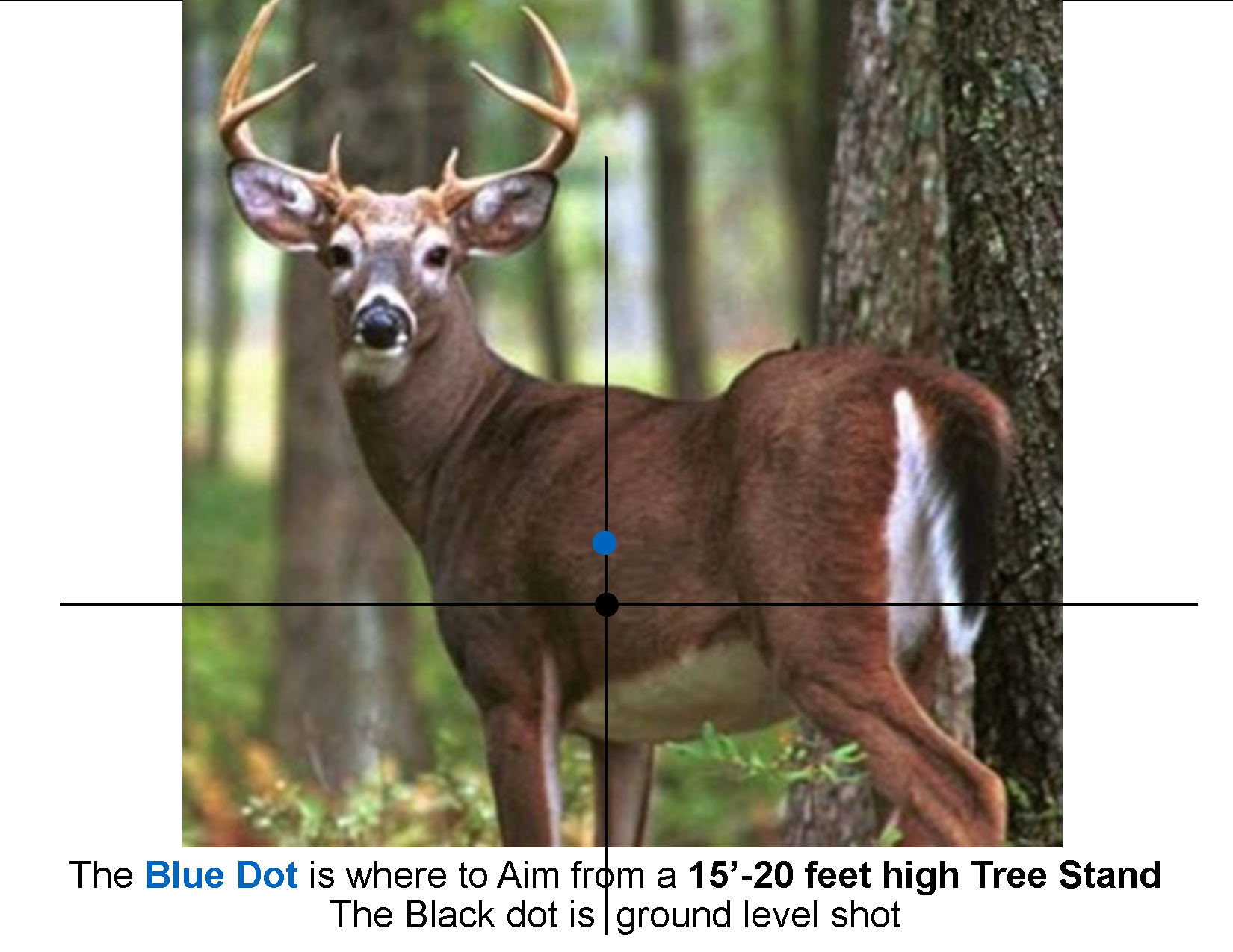 Where To Aim Quartering Away 6Pt Buck - We'Re All About
