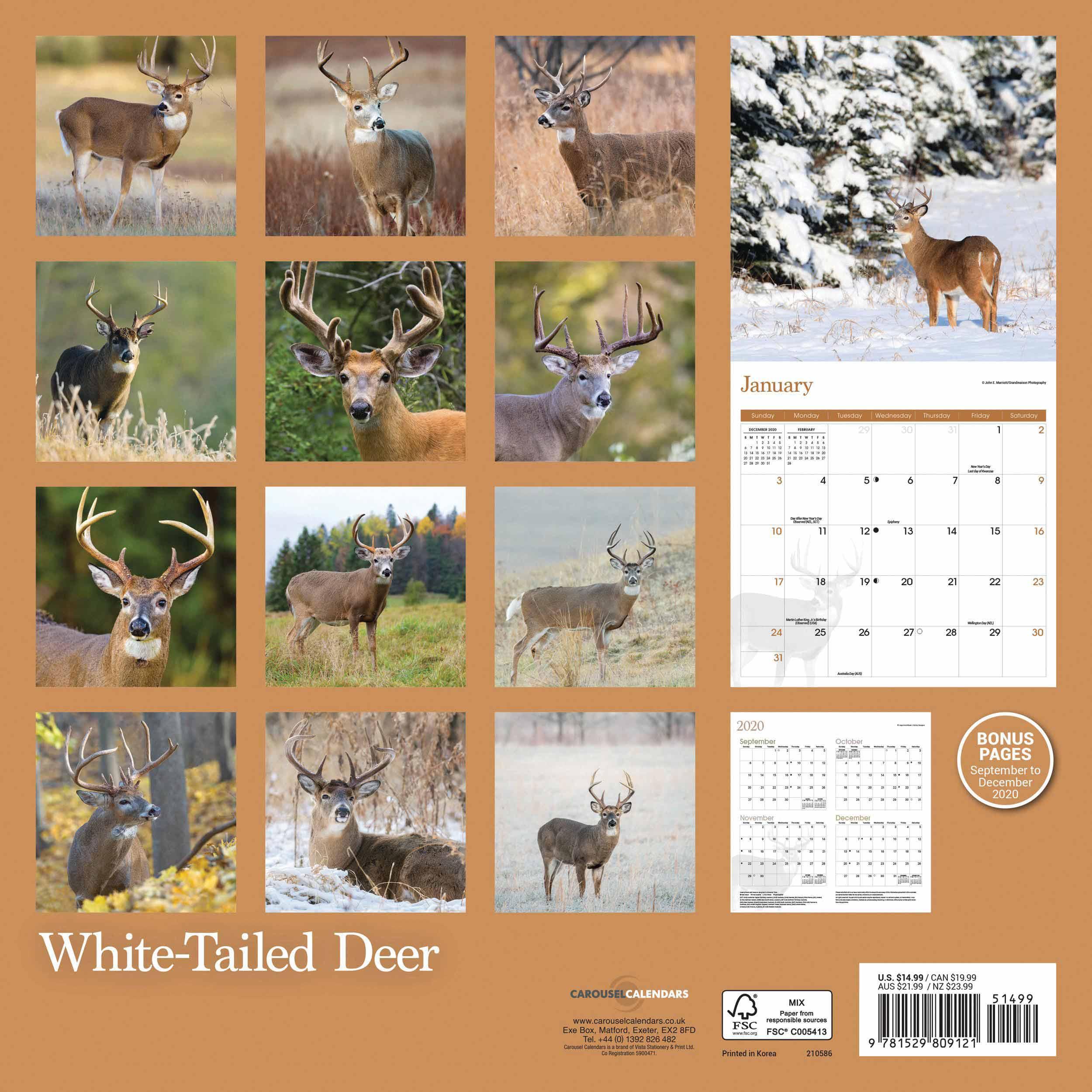 White-Tailed Deer Calendar 2021 At Calendar Club