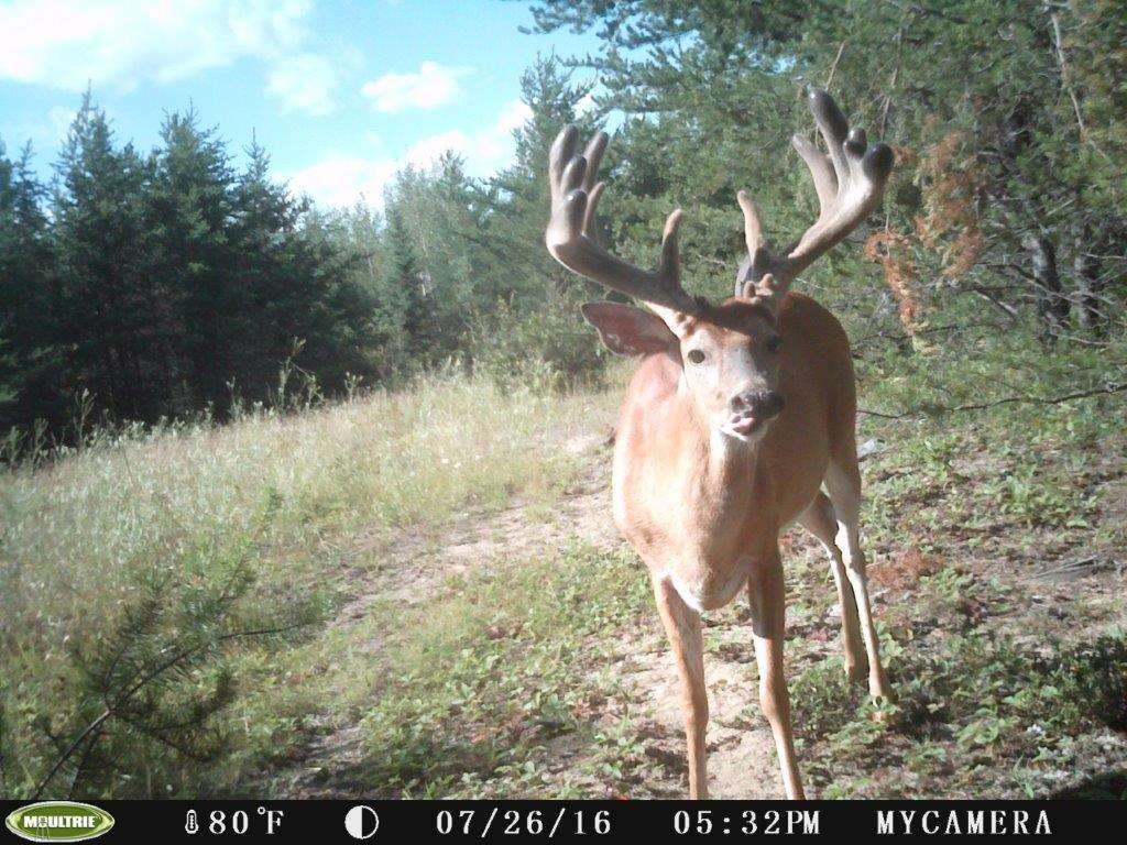 Whitetail Deer Hunting In Rut, 2020 / Ontario, Canada