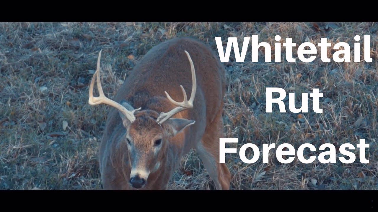 Whitetail Rut Forecast - Michigan And Illinois Hunting