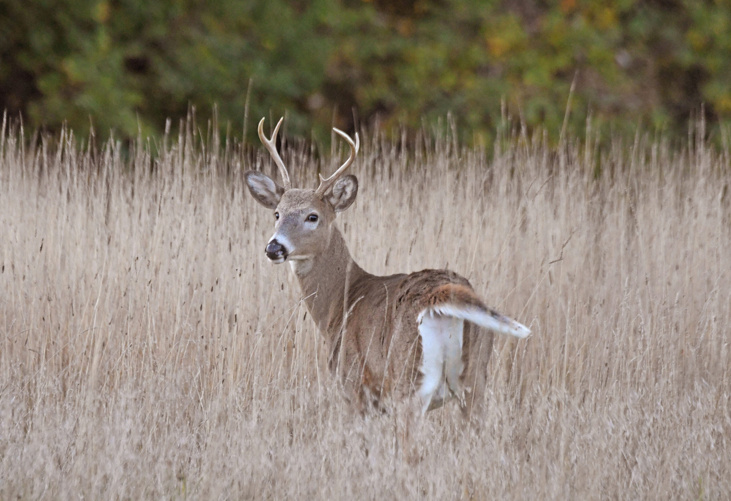 Deer Hunters Head Out For Archery Season