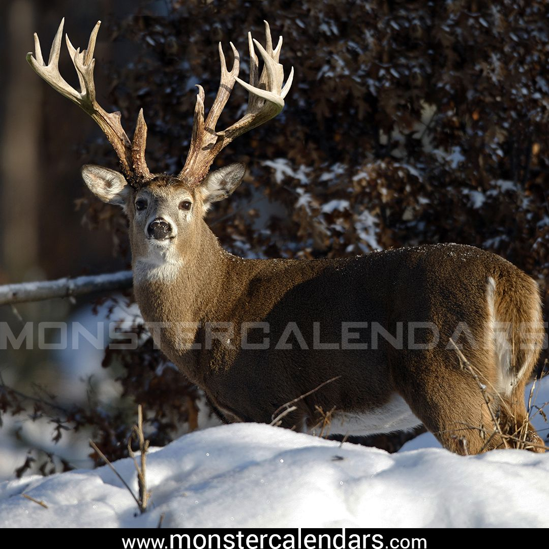 Here Is A Monster Whitetail From Ohio Taken Back In 2006. It
