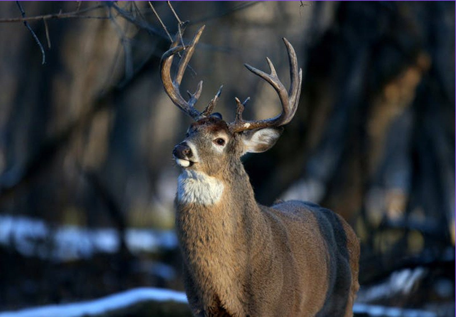 Optimism, New Regulations Greet Deer Hunters As Archery