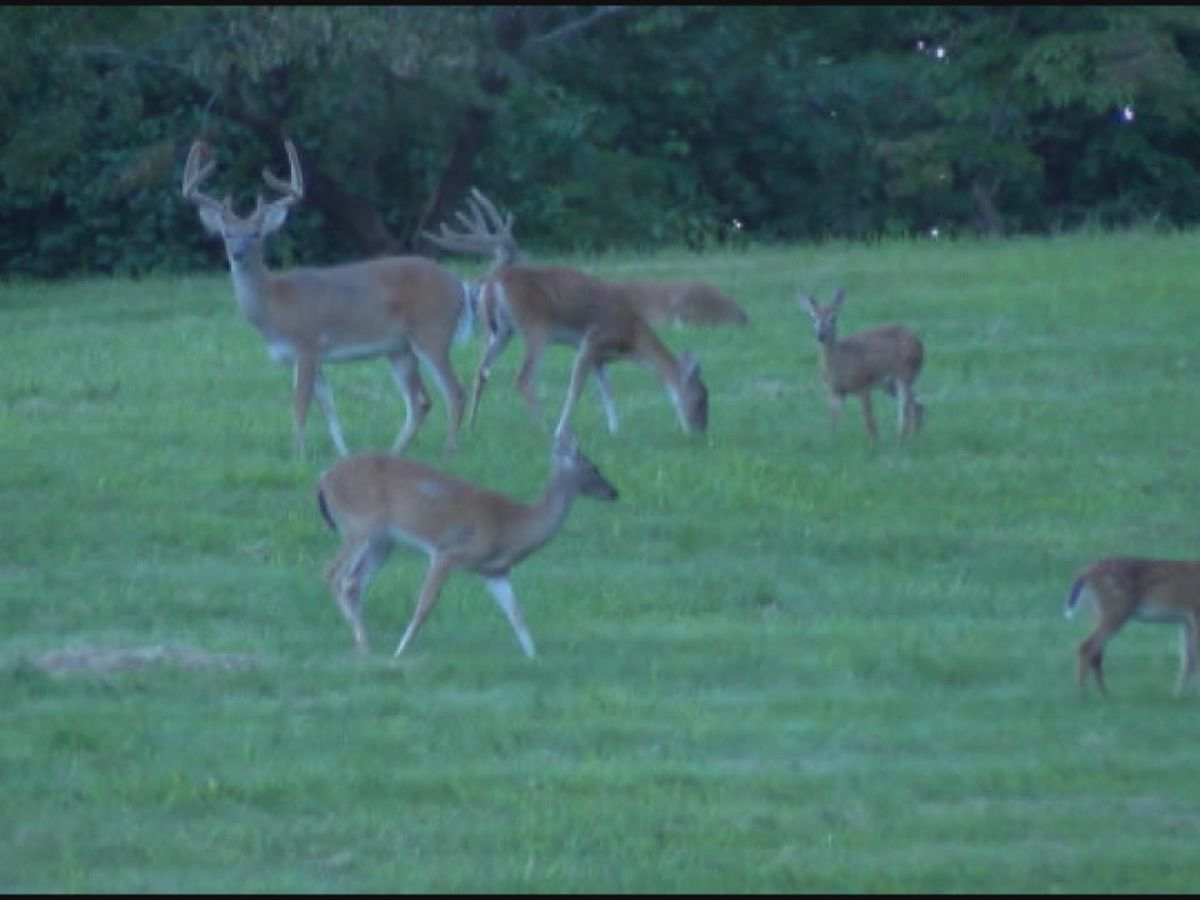 Changes For The 2020 Hunting Season In Alabama Include New