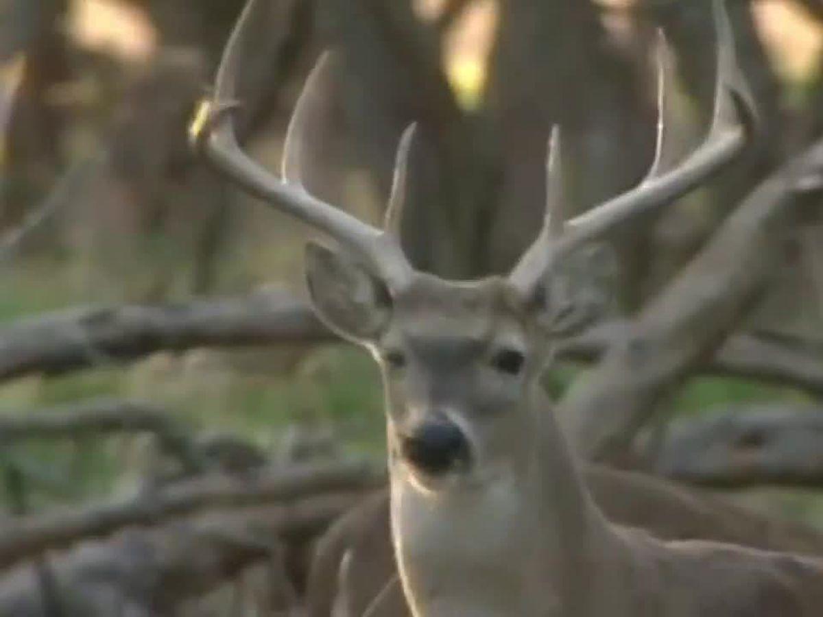 Deer Gun-Hunting Week Begins In Ohio