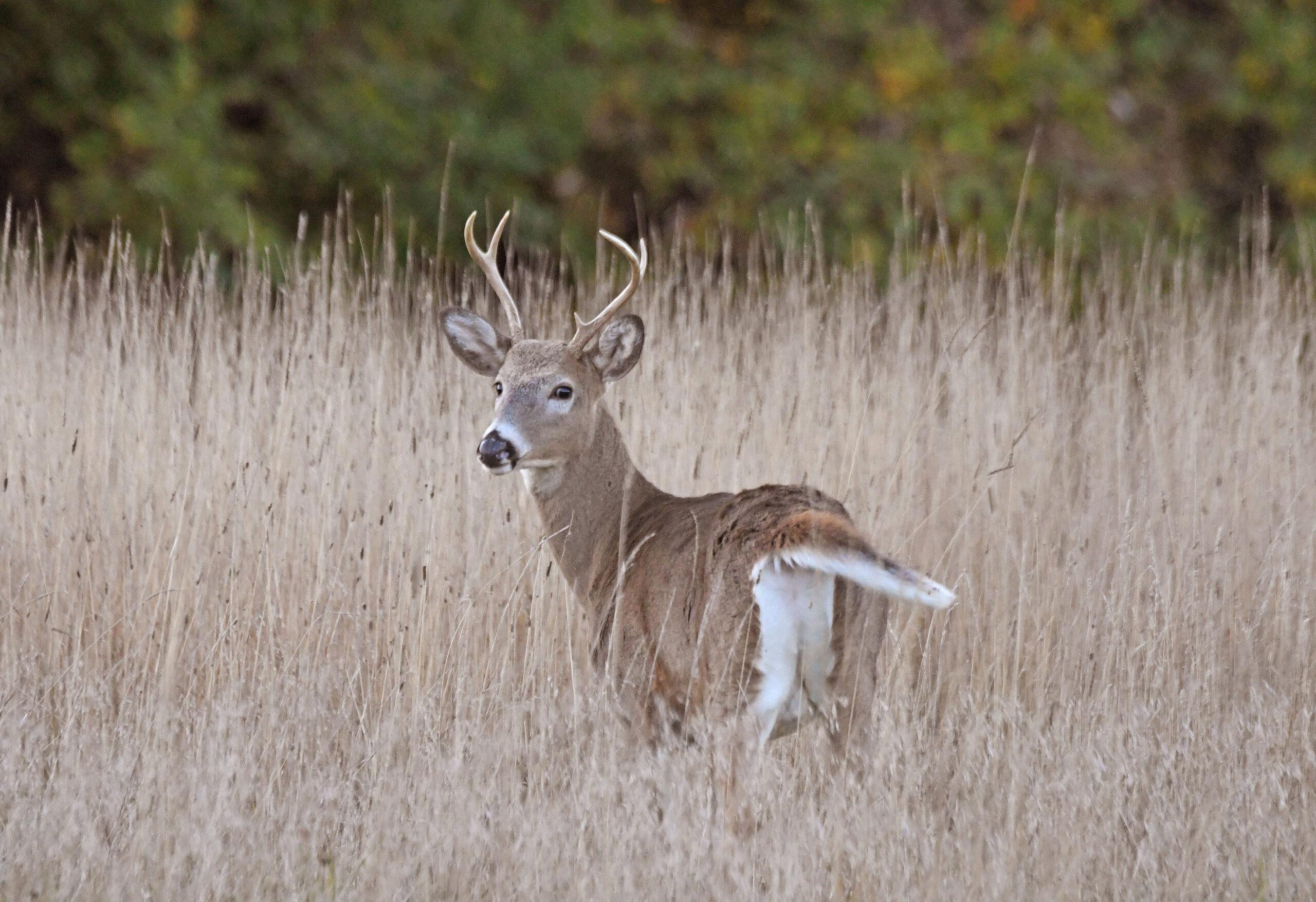 Deer Hunters Head Out For Archery Season
