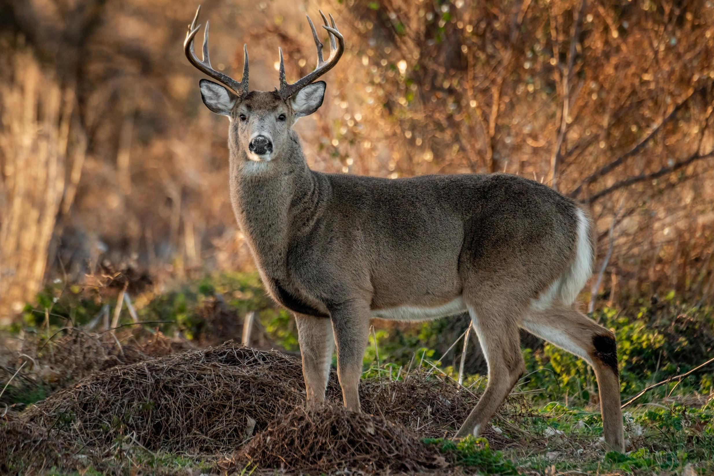 New Alabama Map Shows When And Where To Bag A Buck. | The