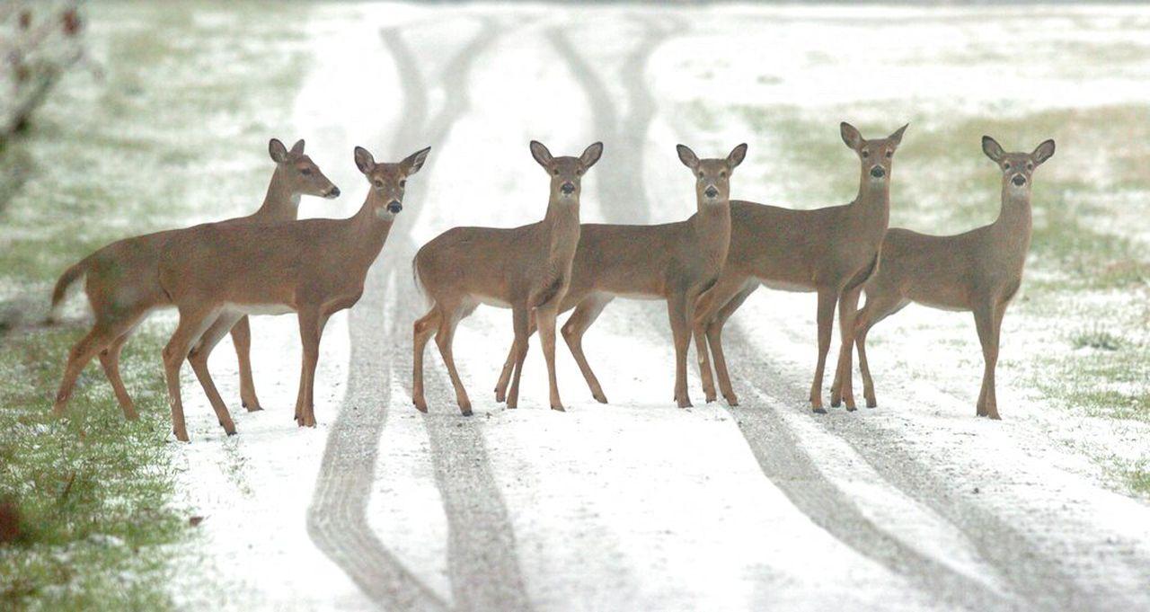 New Map Makes Finding Deer Easier For Alabama Hunters - Al