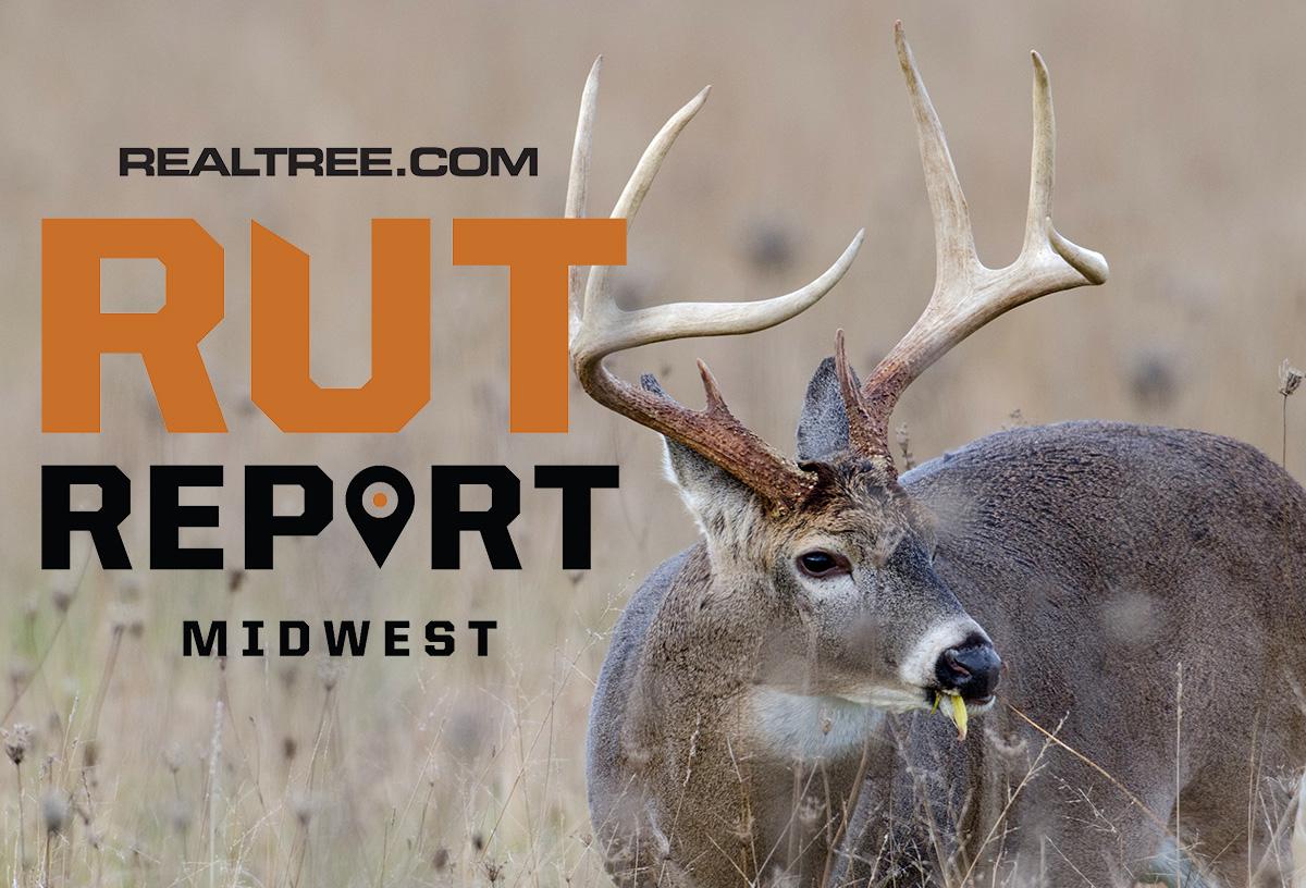 Nov. 12 Midwest Rut Report, 2020