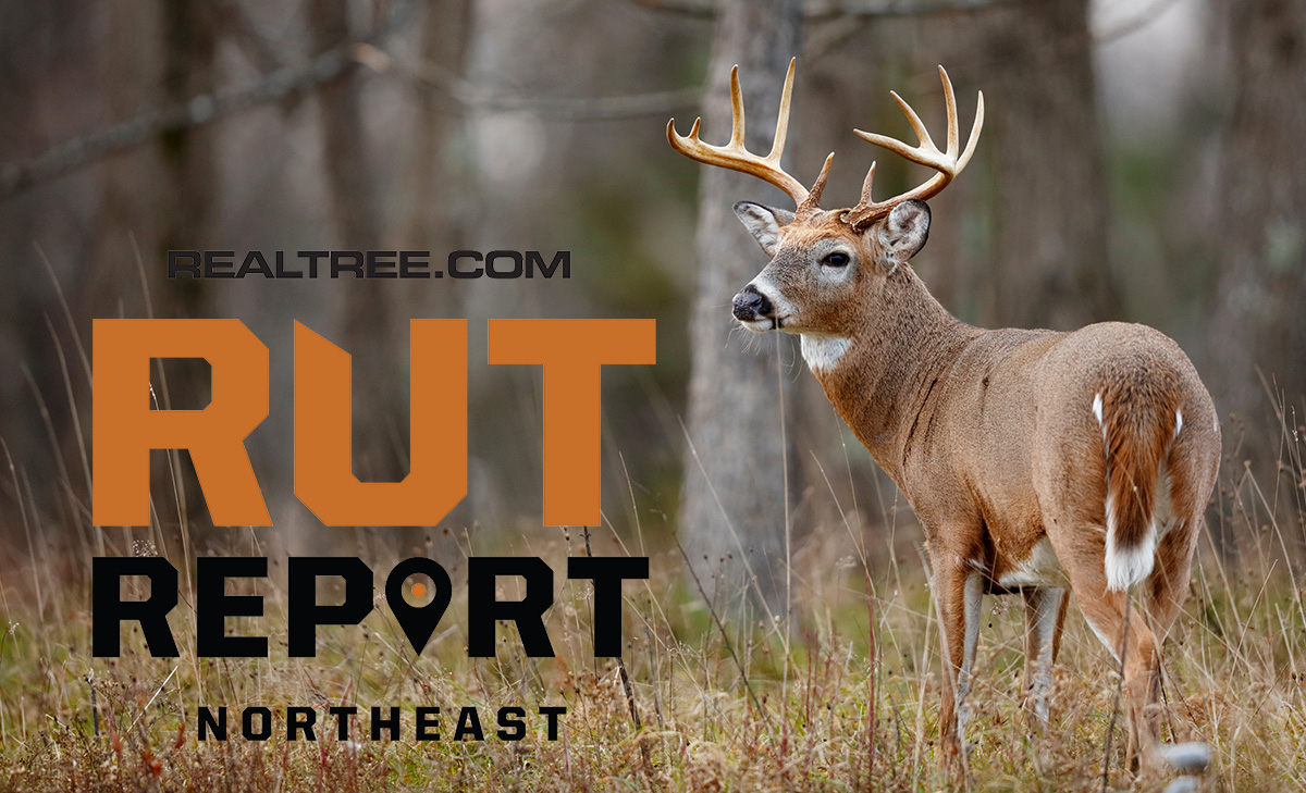 Nov. 5 Northeast Rut Report, 2020