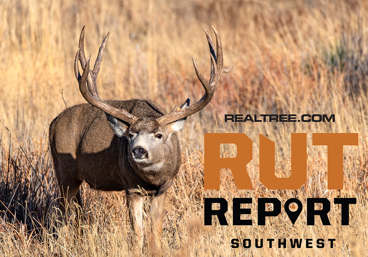 Oct. 30 Southwest Rut Report, 2020