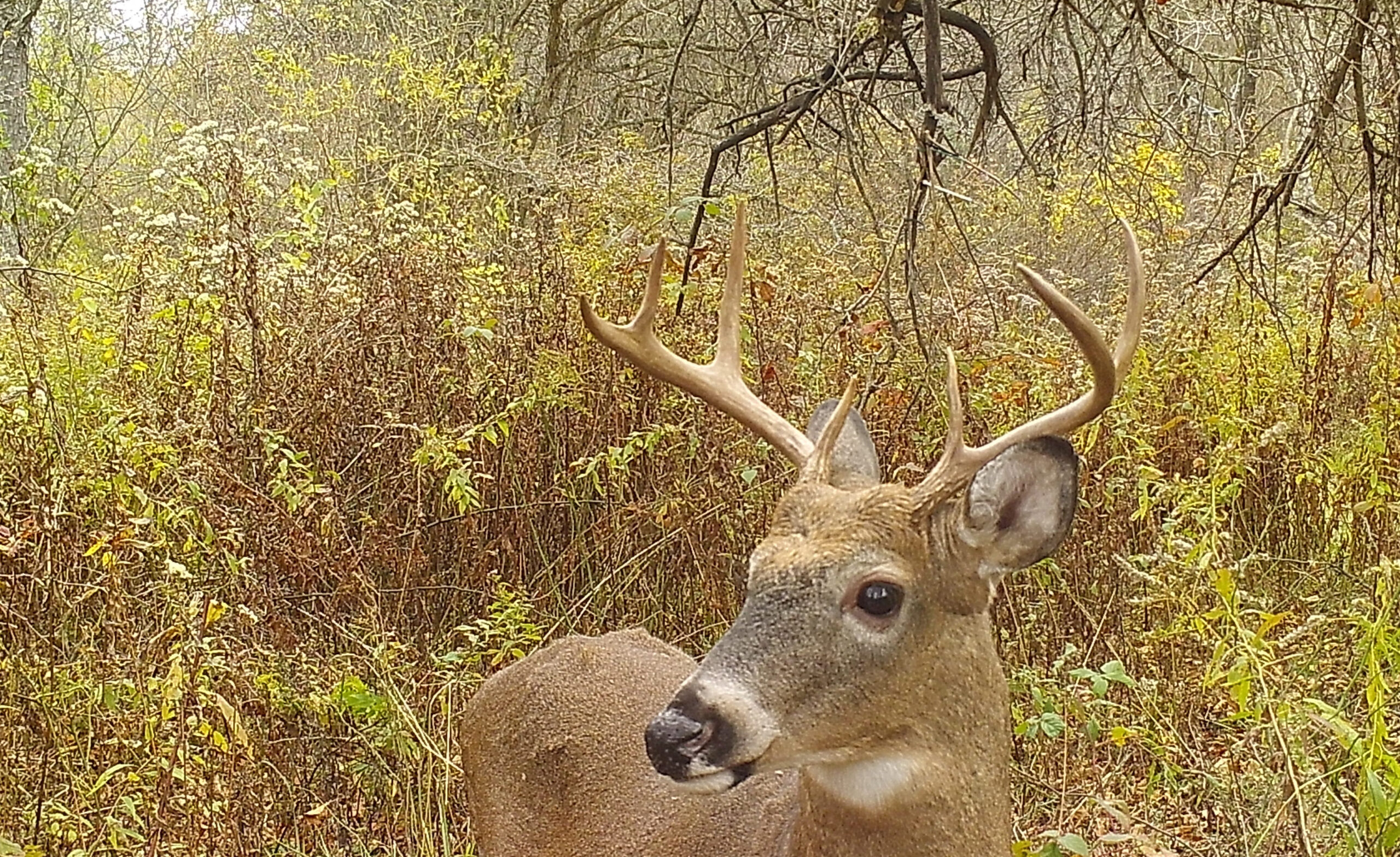 Opening Day Of Deer Season Is Going To Be Exciting, But