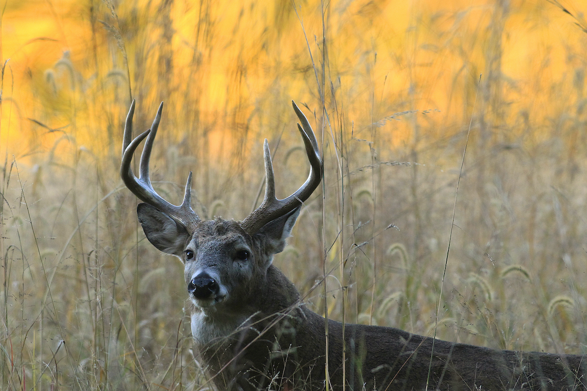 Outdoor Illinois Wildlife Journal