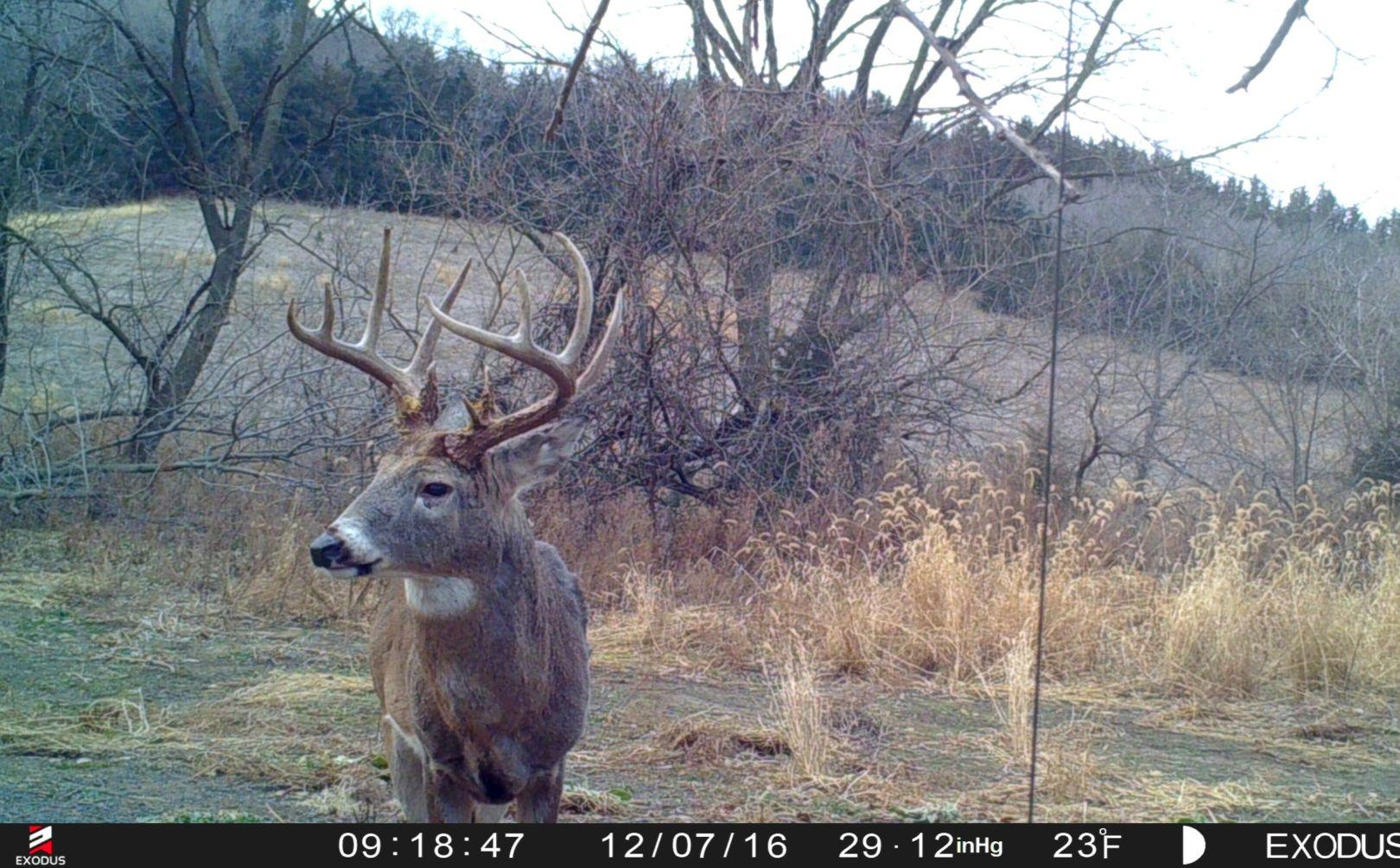 Post Rut Phase Hunting Tactics | Whitetail Habitat Solutions