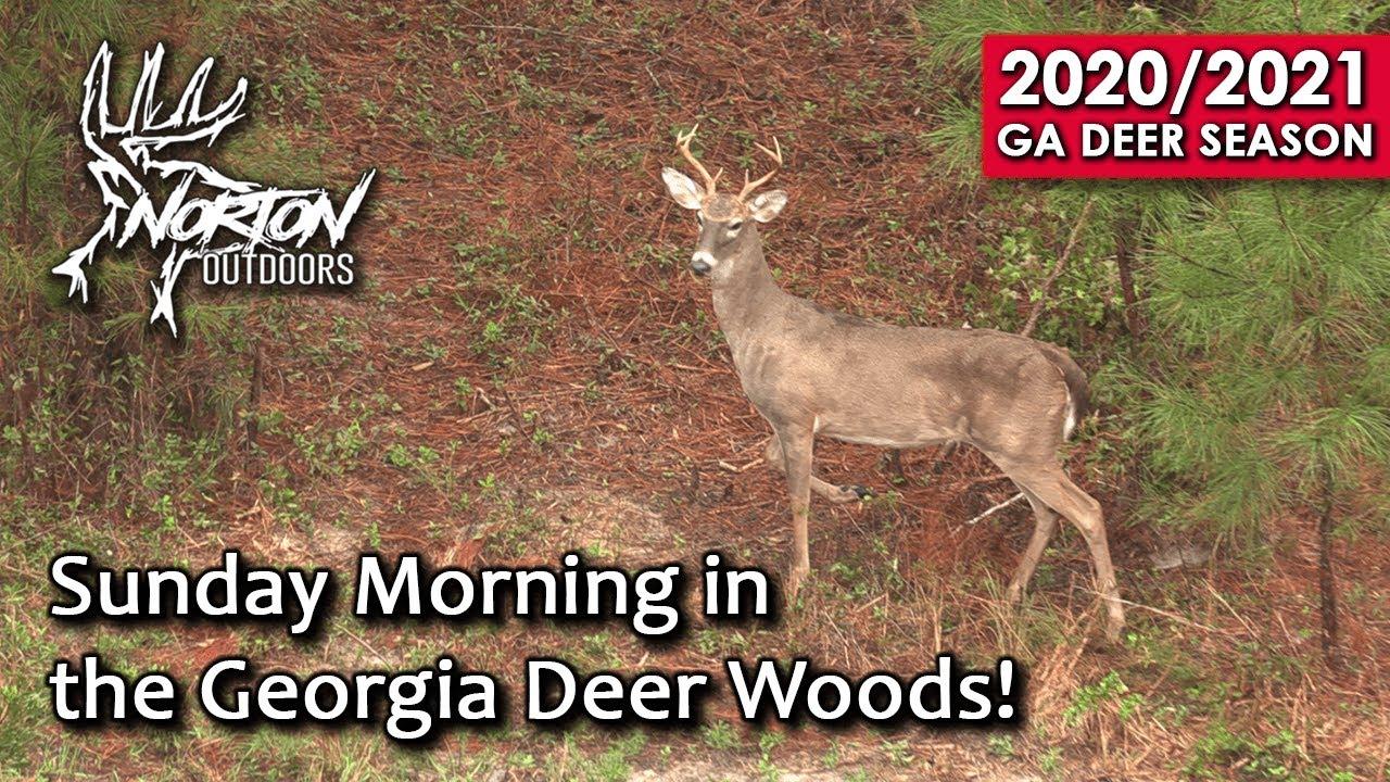 Sunday Morning In The Georgia Deer Woods | Self Filmed | 2020-2021 Season