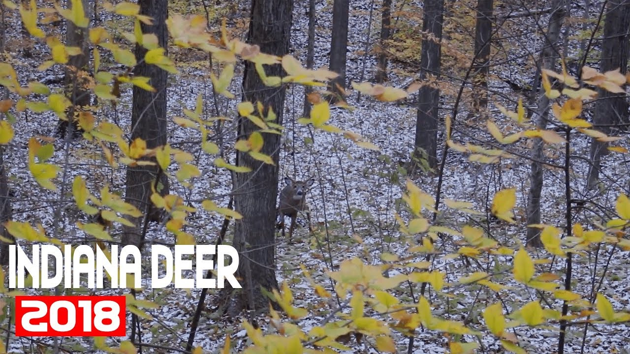 The Rut Is On, Calling In Multiple Mature Bucks! - Indiana Deer Season 2018