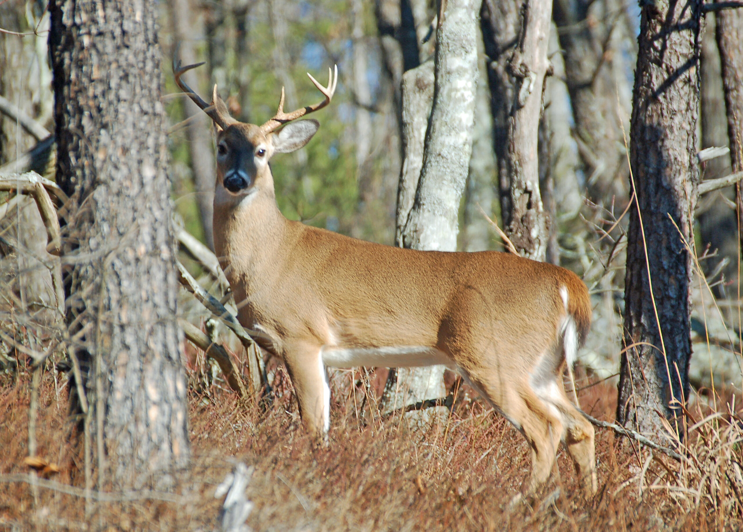 Wff Reactivates 800 Number For Game Check | Outdoor Alabama