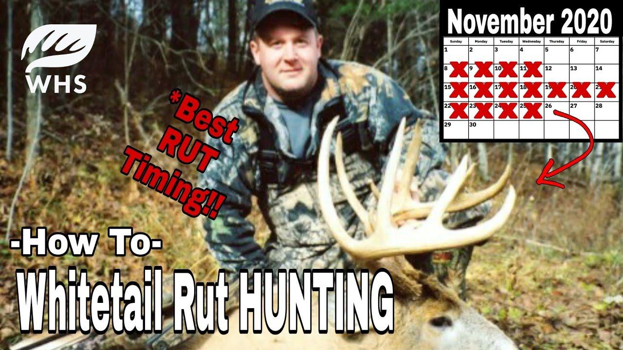Whitetail Rut Hunt Timing Tips