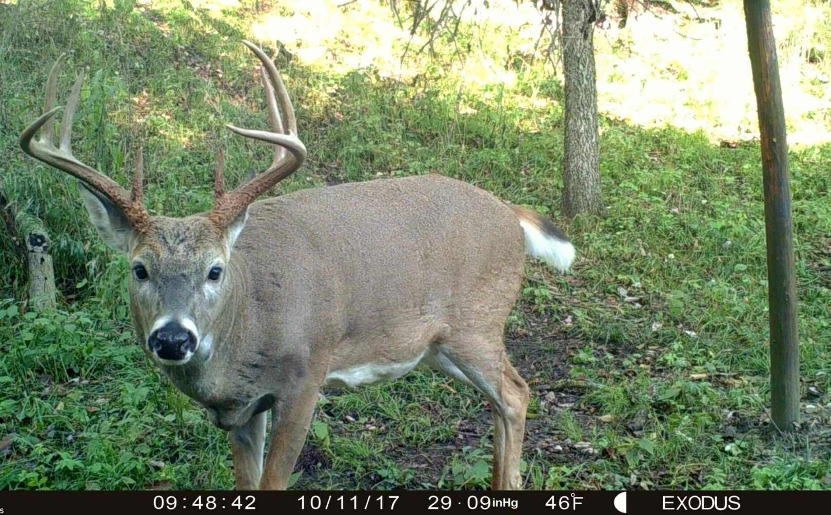 2021 Deer Hunting Rut Forecast | Calendar Printables Free