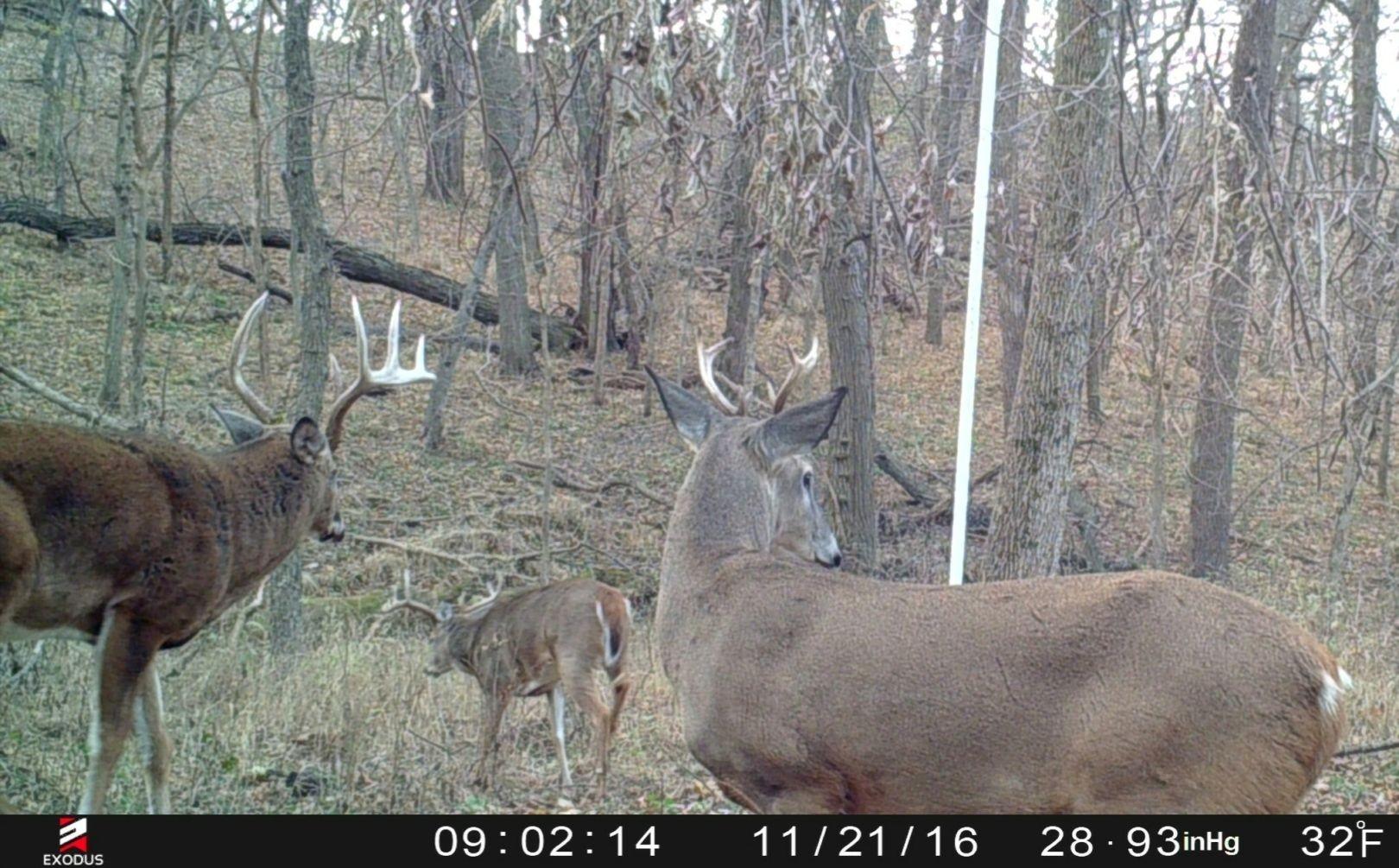 2021 Deer Rut Calendar | Calendar Printables Free Blank