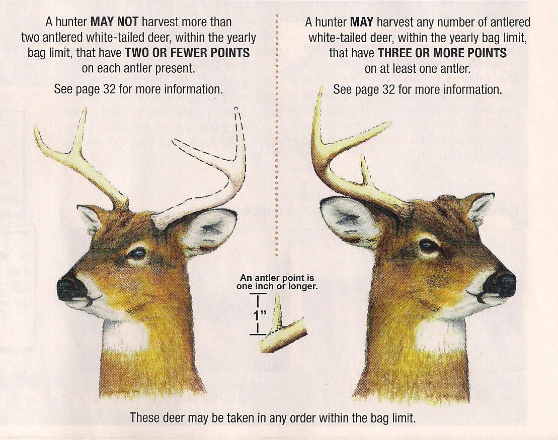 Deer And Deer Hunting Rut Calendar | Calendar Template