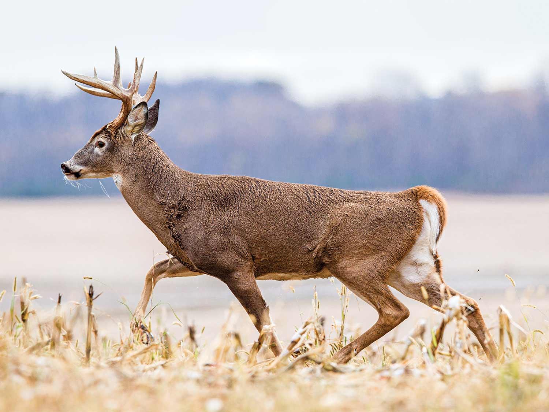 Deer And Deer Hunting Rut Prediction 2021   Calendar