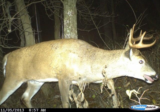 Deer Rut Predictions For Wi 2021 | Calendar Template Printable