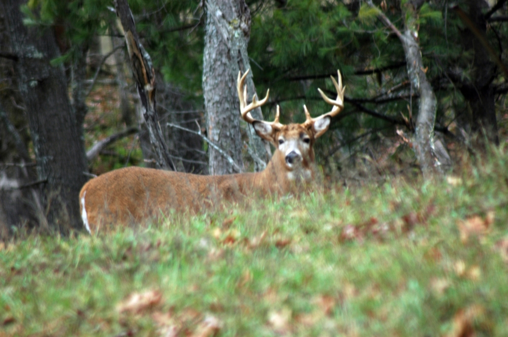 Guided Deer Hunting Wisconsin | High Fence Hunts Wi